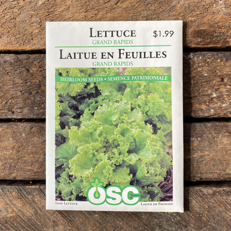 Lettuce Seeds – Grand Rapids – OSC
