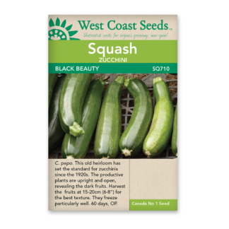 Zucchini Seeds – Black Beauty – WCS