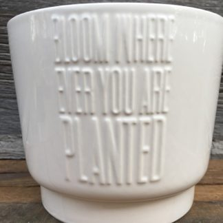 Bloom Where Ever You Are Planted Pot