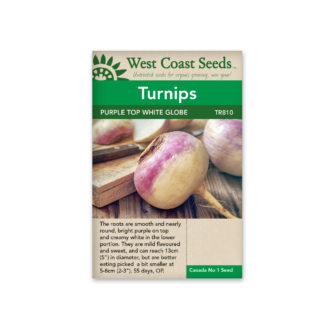 Turnip Seeds – Purple Top White Globe – WCS